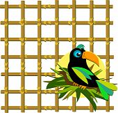 Toucan with Bamboo Grid
