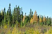 Northern Ontario Forest