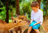 Cute Boy Feeding Young Deers From Hands. Focus On Deer