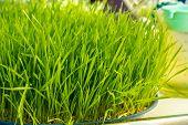 Vegetables, Herbs, Vegetables, Green, Organic Vegetables, Organic, Fresh, Clean.