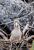 foto of booby  - a galapagos island endangered red footed boobies