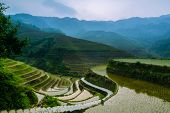 picture of luzon  - terraced rice field in asia in the morning - JPG