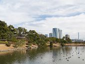 stock photo of duck pond  - Pond with ducks in a park in Tokyo and see the skyscrapers - JPG