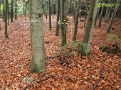 foto of bohemia  - insight into the autumn woods southern Bohemia Czech Republic - JPG