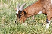 pic of eat grass  - This photo shows close - JPG