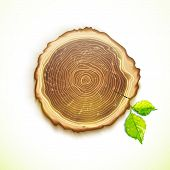 picture of cutting trees  - Vector abstract tree stump round cut with annual rings - JPG