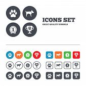 picture of clutch  - Pets icons - JPG