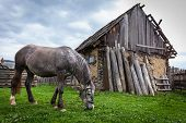 stock photo of beautiful horses  - Horses in the countryside - JPG