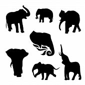 pic of animal silhouette  - Elephant set of black silhouettes - JPG