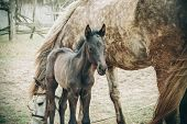 image of foal  - brown foal is about mares - JPG