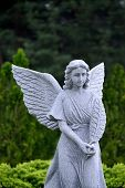 picture of angel-trumpet  - Christian stone marble Angel in forest near church - JPG