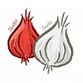 picture of red shallot  - Vector illustration of onion shallot and garlic - JPG
