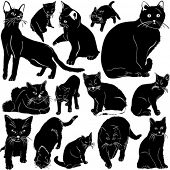 cat vector with details