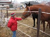 image of feedlot  - Girl with red jacket feeding a horse - JPG