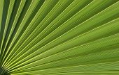 Macro image of green tropical plant with long leaves