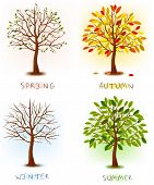 Four seasons - spring, summer, autumn, winter. Art tree beautiful for your design. Vector illustrati
