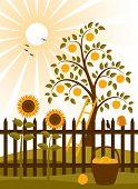 Apple Tree Behind Fence