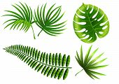 Realistic Vector Illustration Of Tropical Plant Leaves Set. Monstera, Fern, Palm, Yucca. Tropical Pl poster