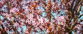 Apricot Blossom On A Sunny Day, The Arrival Of Spring, The Blossoming Of Trees, Pink Buds On A Tree, poster