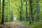 Misty Autumnal Ground Road