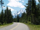 Road To Coulter Bay (View Of The Grand Tetons)