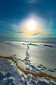 The Setting Winter Sun And Solar Halo Over The Frozen River. Western Siberia, Novosibirsk Region, Ob poster