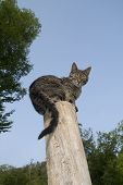 Domestic Cat Against Blue Sky poster