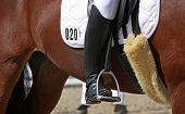 Human leg on horseback