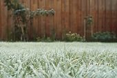 Frosty Grass In The Garden On Winter, Winter Grass In The Morning, Frost On Meadow In The Garden poster