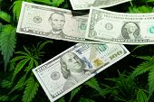 Money And Pot. Cannabis Finance. Revenues In The Marijuana Industry And The Medical Industry. Americ poster