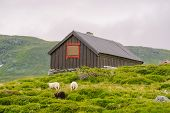 Hut Wooden Mountain Huts In Mountain Pass Norway. Norwegian Landscape With Typical Scandinavian Gras poster