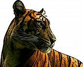 Tiger Profile Illustration