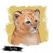 Tigon Baby Tabby Animal Watercolor Portrait In Closeup. Animalistic Drawing Of Tigon Hybrid Mammal.  poster