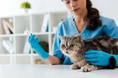 Selective Focus Of Young Veterinarian Holding Syringe Near Tabby Scottish Straight Cat poster