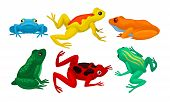 Frogs Collection, Cute Amphibian Animals Of Different Colors Vector Illustration poster