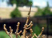 Dragonfly Standing Upright