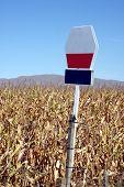 Drought affected maize crop