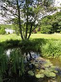 stock photo of backwoods  - Rural stream and pond landscape photographed at Colby Woodland Garden near Amroth in Pembrokeshire - JPG