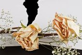 stock photo of broken heart flower  - dried up roses and ripped white paper over black - JPG
