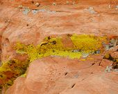 Yellow Lichen on red rock