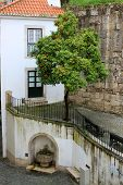 Orange Tree And Fountain In Alfama