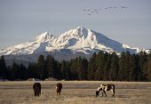 Wild Geese Fly Migrate Mountain Winter Cascade Range Oregon Ranch