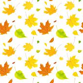 Seamless background with flying autumn leaves of a birch, maple and barberry. Isolated on white background