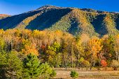 stock photo of cade  - Fall foliage on display from Hyatt Lane in Cade - JPG
