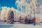 Fantastic winter landscape. Ukraine, Europe. Beauty world.