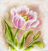 Painted watercolor card with tulip flowers