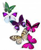 group of butterflies