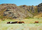 Herd of horses among mountains
