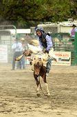 Colt Riding