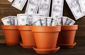 Business concept: growing money in the flowerpots on table